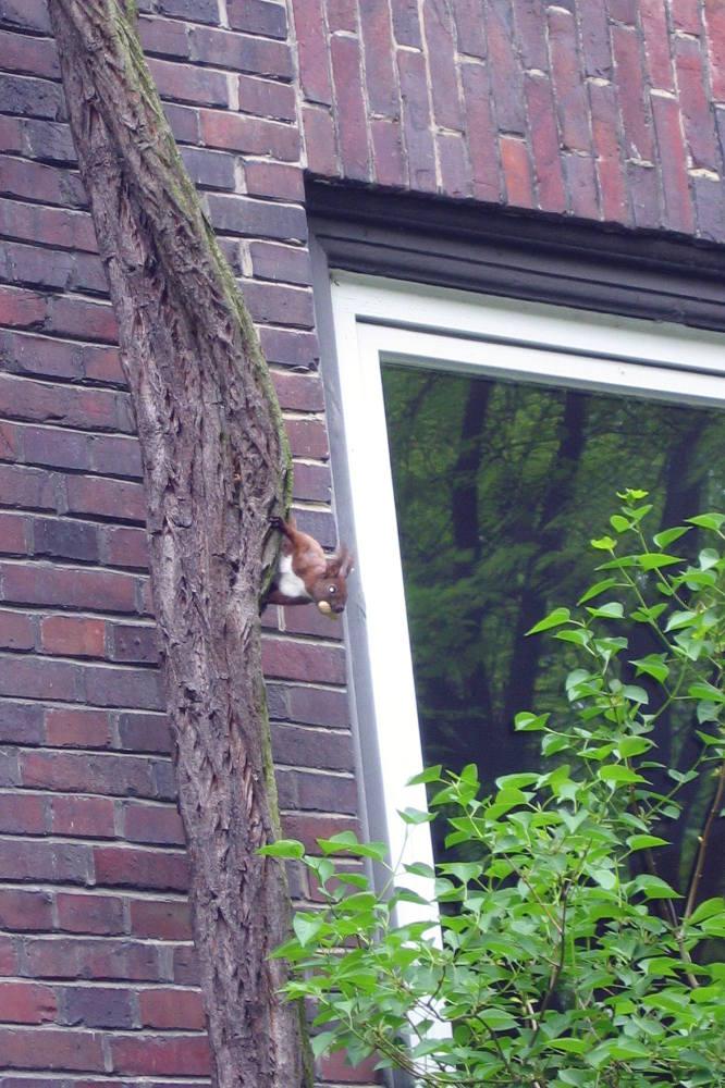 Eichhörnchen an einer Hauswand