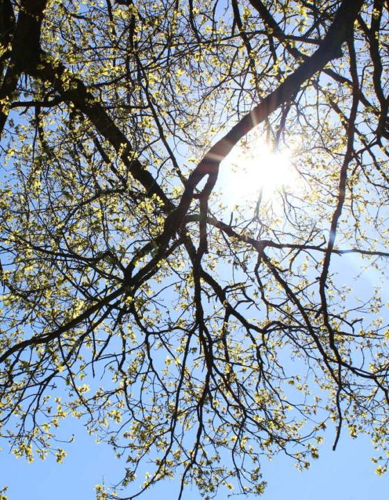 Das Frühlingsfest